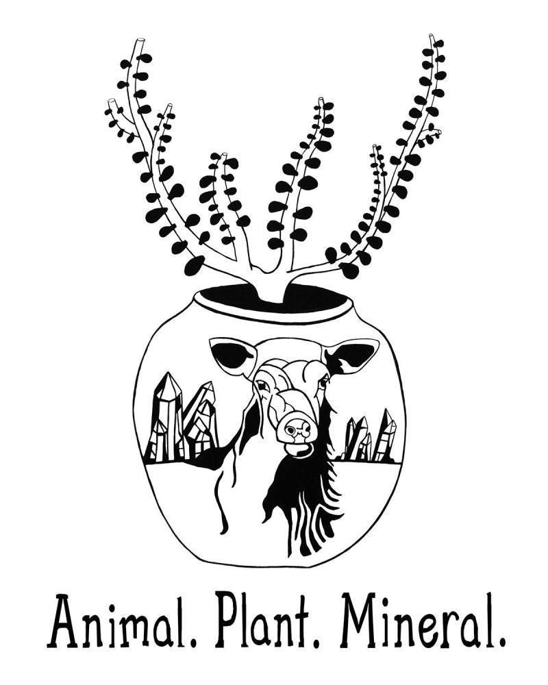 Animal Plant Mineral | Animal.Plant.Mineral.PDX | Portland popup shops | find faerwear | faerwear stockists | faerwear